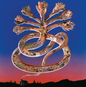 Wounded-Galaxies